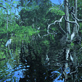 Wekewa River by Thomas Stead