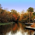 Wekiva Island by Andrew Armstrong  -  Mad Lab Images