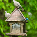 Welcome To My Bird Feeder by Donna Brown
