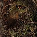 Well Hidden Nest by Damon Calderwood
