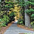 Wellesley College Walkway by Modern Art