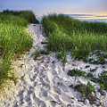 Wellfleet Beach Path by Tammy Wetzel