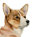 Welsh Corgi Dog Painting by NamiBear