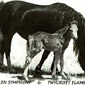 Welsh Pony Mare And Foal by Kathy Shell