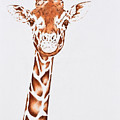 West African Giraffe by Andrea Angulo