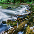 West Fork Water Over Log by David Smith