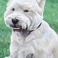 West Highland Terrier by Nicole Zeug