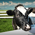 West Michigan Dairy Cow by Randall Nyhof
