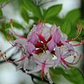 West Virginia Appalachian Trail Flowers by Raymond Salani III