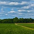 West Virginia Field  by Lisa Kleiner