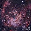 Westerlund 2 Star Cluster In Carina by Robert Gendler