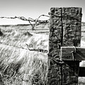 Western Barbed Wire Fence Black And White by Carol Groenen
