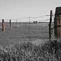 Western Flint by Dylan Punke