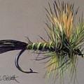 Western Green Drake by Cindy Gillett