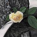 Western Yellow Rose Iv by Jody Lovejoy