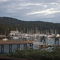 Westsound Wa by Cindy Murphy - NightVisions
