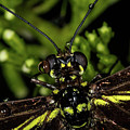 Wet Butterfly by Jay Stockhaus