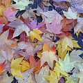 Wet Fall Leaves by Alan Olmstead