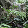 Wet Ferns by Crooked Cat Art and Photography