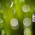 Wet Grass  by Silke Magino