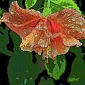 Wet Hibiscus by Craig Wood