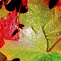 Wet Leaves Of Fall by Larry Keahey