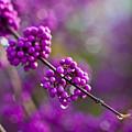 Wet Purple 2 by Mike Reid