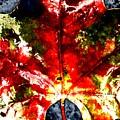 Wet Single Leaf by Beth Akerman
