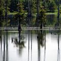 Wetland by Amanda Barcon