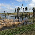 Wetland Palms by Anne Sands