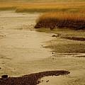 Wetland Stream by Jack Foley