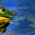 Wetlands Frog by Bill Dodsworth