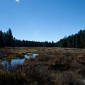 Wetlands In The Woods by Angus Hooper Iii