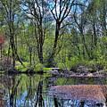 Wetlands Lake by David Patterson