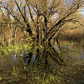 Wetlands Mirror Reflection by Cary Leppert