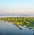 Wetlands Morning Mist  by Genevieve Vallee