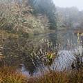 Wetlands by Robert Potts