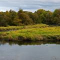 Wetlands by Shari Nees