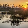 Wetlands Sunrise by David Hart
