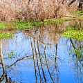 Wetlands Viewing Area In Chatfield State Park by Steve Krull