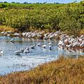 Wetlands Watering Hole by John M Bailey