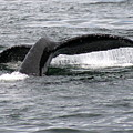 Whale Tail by James Reed