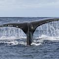 Whale Tail by Lita Kishbaugh
