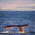 Whale Tail by Susan Rissi Tregoning