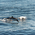 Whale Watching And Dolphins 1 by Enrico Pelos