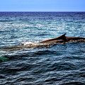 Whale Watching Balenottera Comune 4 by Enrico Pelos