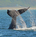 Whale Waterfall by Laryssa Densmore