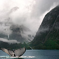 Whale's Tale by Harry Spitz