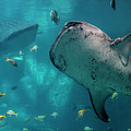 Whale-sharks by Barbara Bowen