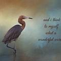 What A Wonderful World by Kim Hojnacki